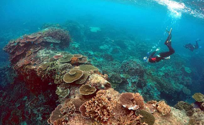 Vast New Reef Discovered Hiding Behind Great Barrier Reef
