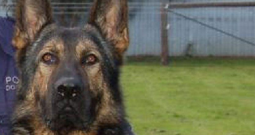 Man arrested after attempting to drown police dog