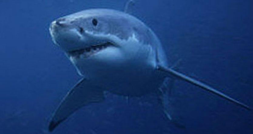 'It Was Going To Eat Her' - Australian Teen Survives Deadly Shark Attack