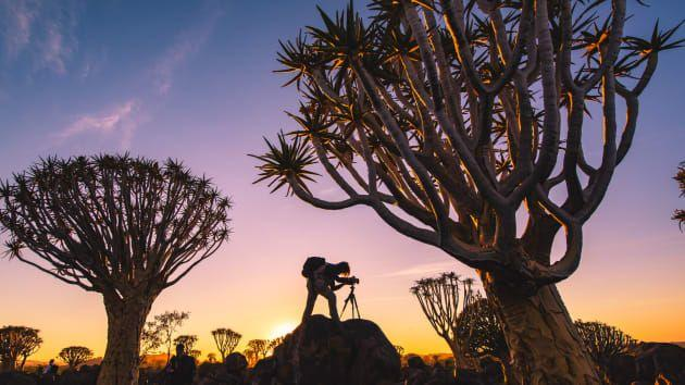 A quiver tree forest