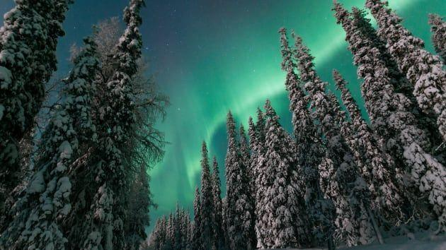 The Northern Lights atop a snow-dusted forest