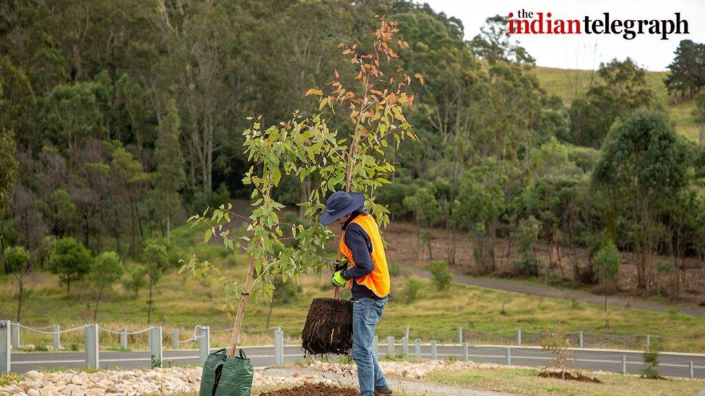 Trees to be planted across Greater Sydney