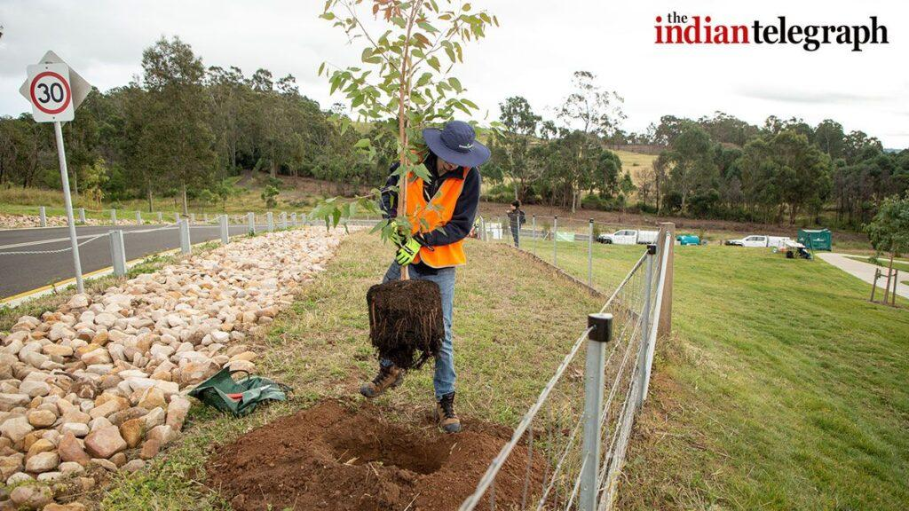Trees to be planted across Greater Sydney Australia