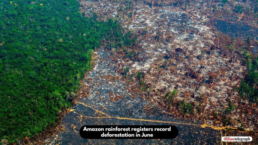 Amazon rainforest registers record deforestation in June
