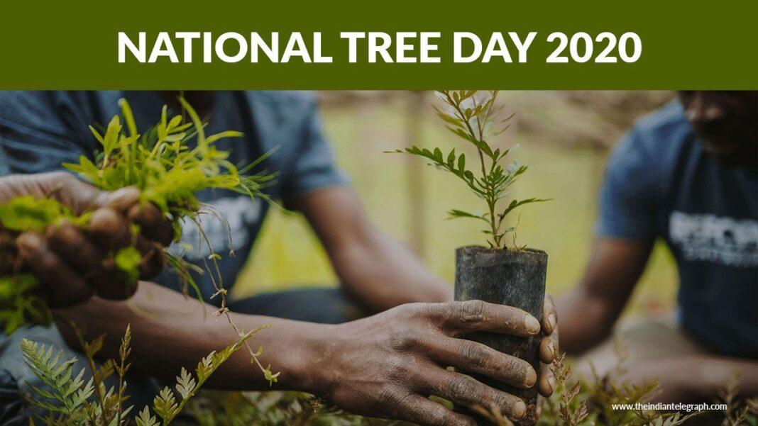 City of Parramatta branches out on National Tree Day
