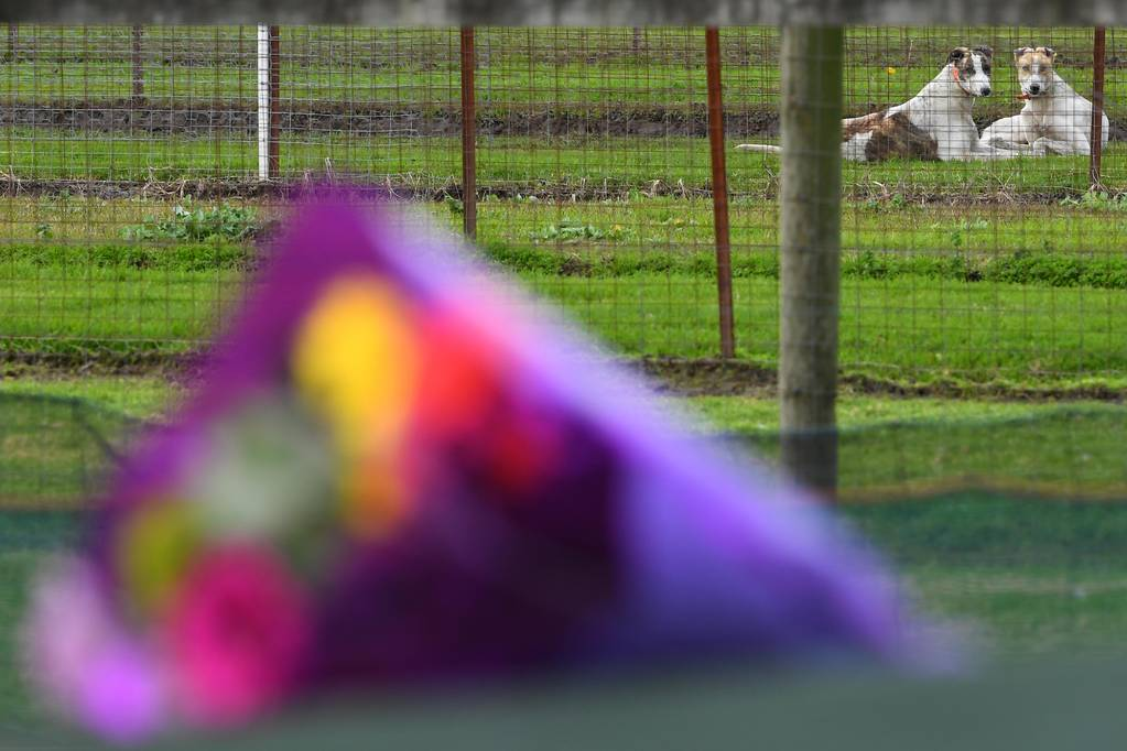 Greyhound dogs are seen behind flowers laid by a mourner at the property of Greyhound trainer Karen Leek in Devon Meadows