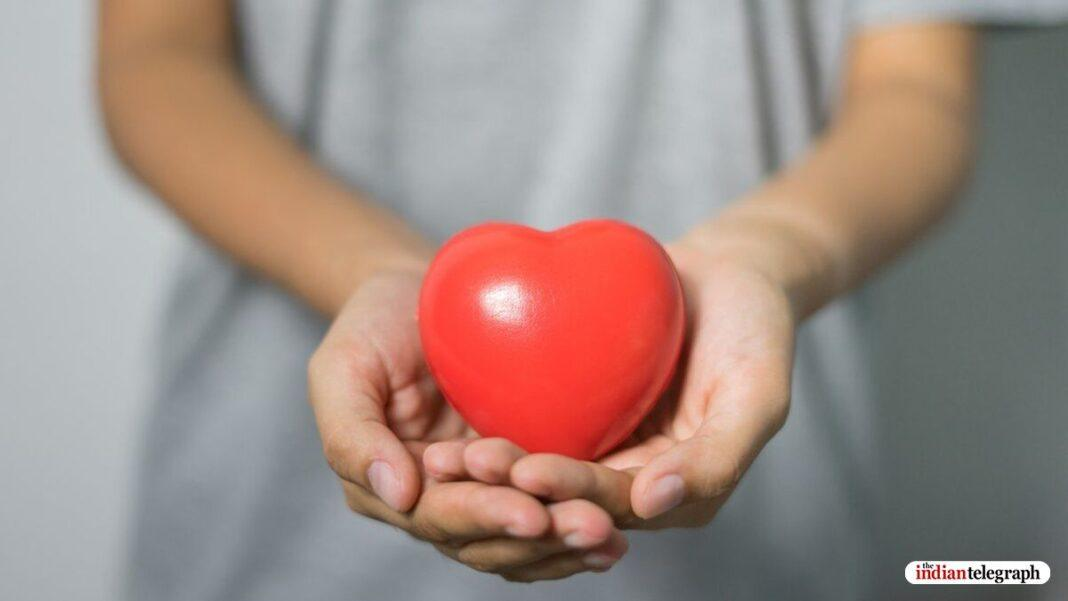The female medical doctor carry red heart shape model in hands in the concept of care your heart