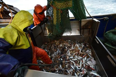 Brexit Fishing Compromise Finally Surfaces
